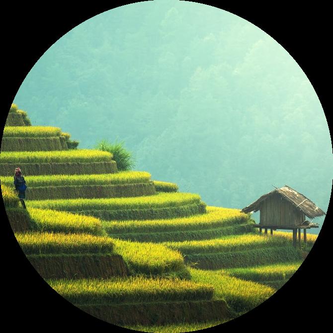 empreinte écologique en hectares de rizière