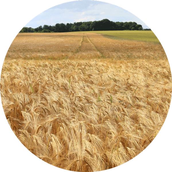 empreinte écologique en hectares de blé